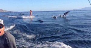 Surfing z delfinami