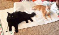 Co koty widzą w święta