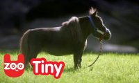 Malutki koń