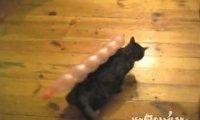Igraszki kotów
