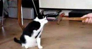 Kot vs młotek