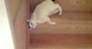 Kot schodzi ze schodów