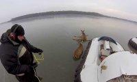Ruszajmy pomóc jeleniom