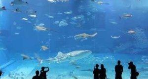 Niesamowite akwarium