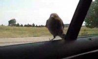 Odważny ptak