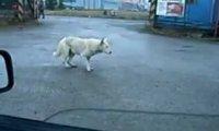 Imprezowy pies