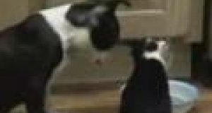 Psia miska
