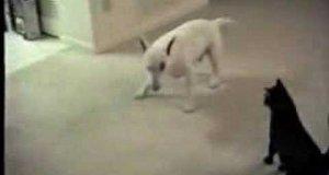 Bitwa zwierzaków