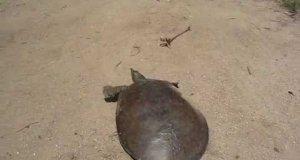 Super szybki żółw