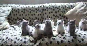 Banda kociaków tańczy