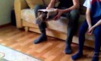 Koty uwielbiają pudełka