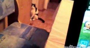 Zakradający się koteł