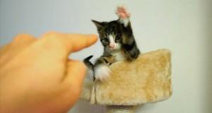 Koty na opak