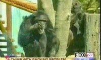 Małpa pali papierosa