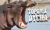 10 najbardziej zabójczych zwierząt