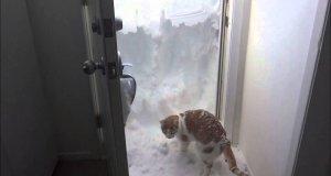 Kot wykopuje wyjście z zasypanego domu