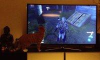 Assassin's Creed dezorientuje kociaka