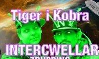 Tiger i Kobra Intercwellar - Zdupping