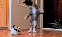 Mały kociak bawi się z roboto-psem