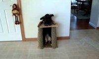 Pies je przy swoim własnym stole