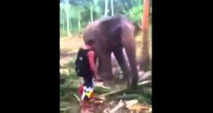 Słoń nokautuje turystę