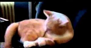 Kot na głośniku