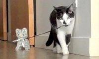 2 koty i pluszak