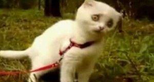 Zszokowany kot