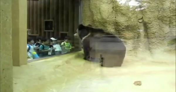 Bear In Da Zoo