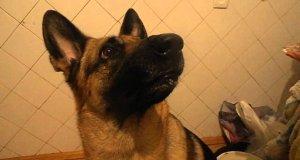 Szybka zmiana nastroju u psa