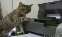Koty vs drukarki