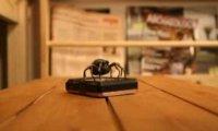 Żaba vs pająk