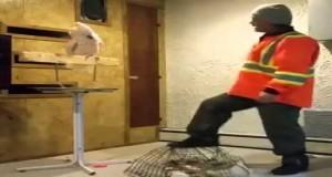 Wściekła papuga