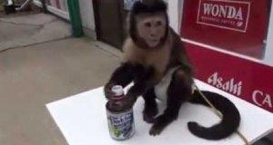 Soczek dla małpki