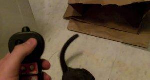 Szczur w toalecie