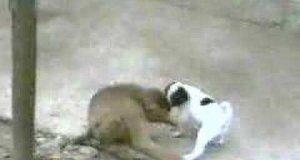 Małpka i pies