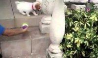 Pieski vs schody