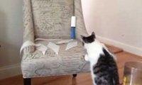 Kot, który był zbyt ciekawski