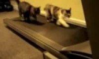 Koty na bieżni