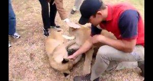 Psy i lwy to najwięksi przyjaciele