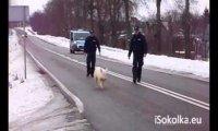 Policja goni sprytnego zwierzaka
