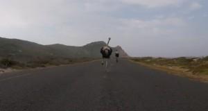 Ptasi horror podczas wycieczki rowerowej
