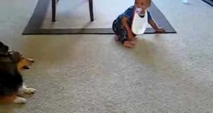 Dziecko i pies