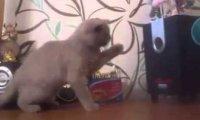 Kot chwyta basy