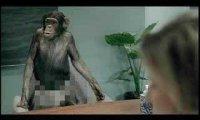 Rozmowa o pracę - małpa