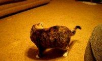 Kot odkrywa swój ogon