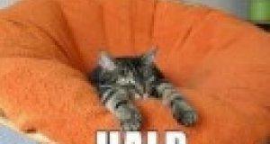 Fotki kotów