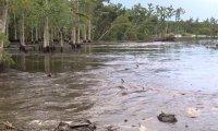 Woda pochłania drzewa