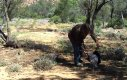 Jak złapać kangura