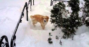 Pies brnie dzielnie w śniegu